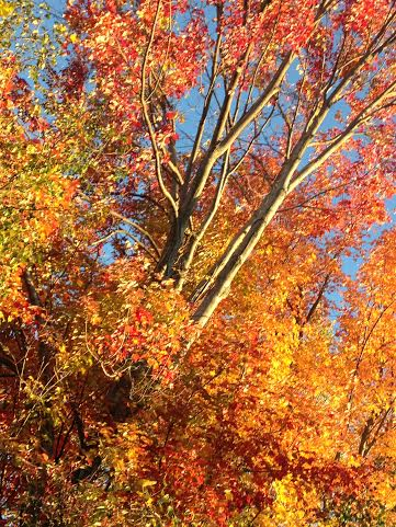 The days of warmth and color are quickly becoming a memory.