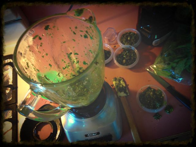 It's a pesto explosion in my kitchen!